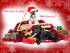 Funny Christmas card with 2 cute dogs