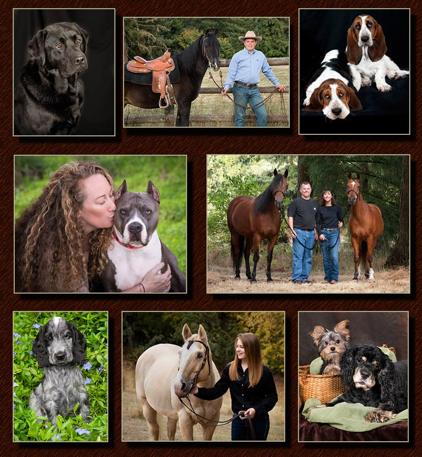 dogs, cats, horse portaits